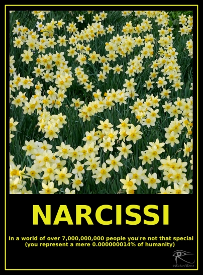 160114_narcissi