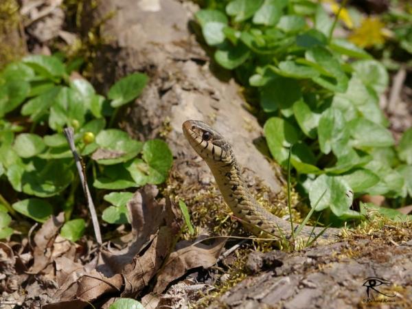 160318_Snake