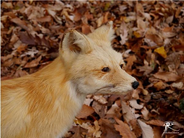 160409_Fox
