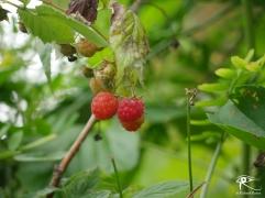160715_Garden9
