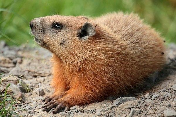 180202_GroundhogPD.jpg