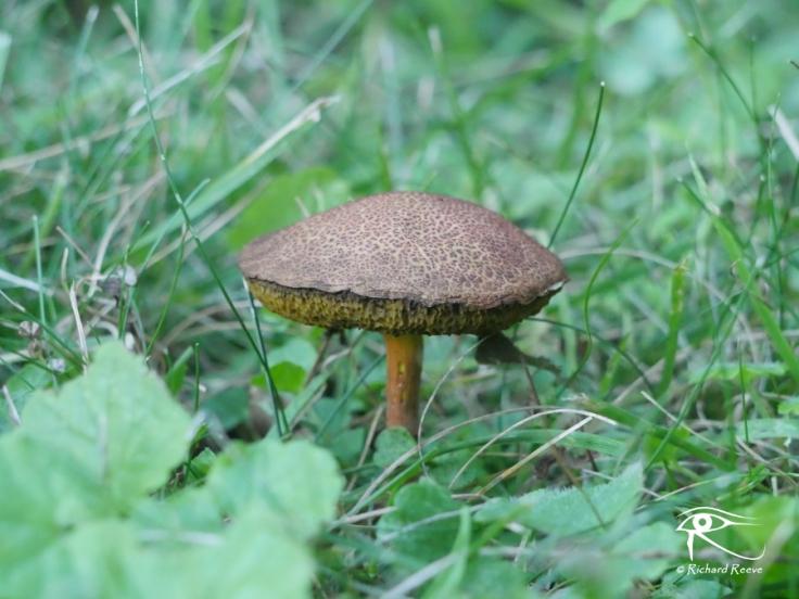 180729_Fungi2